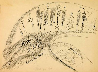 Archives of Santiago Ramon Y Cajal and the Spanish Neurohistological School